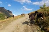 Are donkeys friendly?