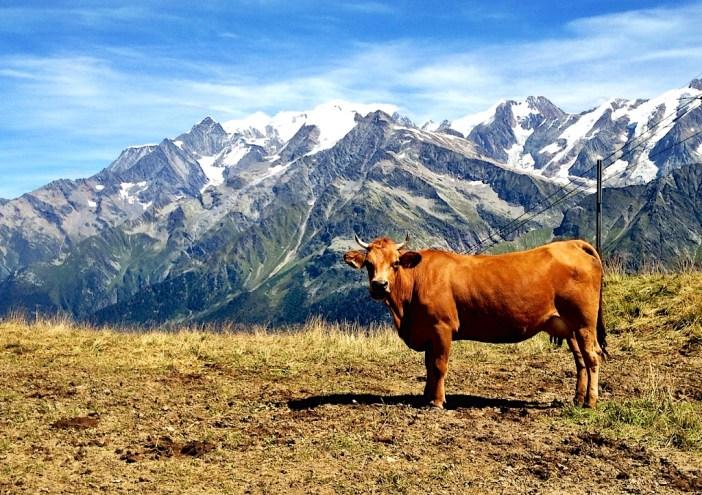 High altitude milk - Tête du lac de Roselette