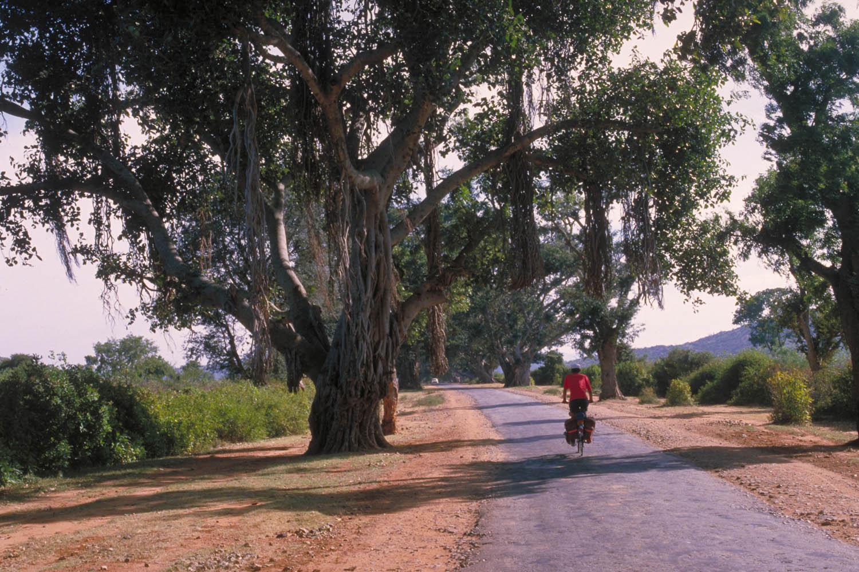beautiful trees, bumpy road