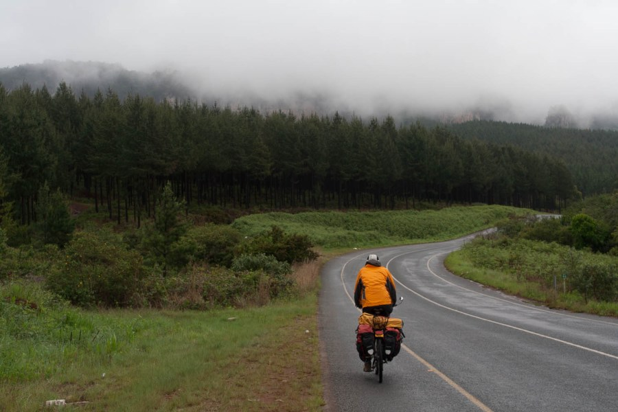 endless and dense pine plantations are typical for this region