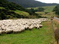 Får Nya Zeeland
