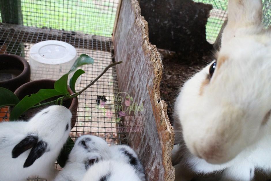 hotel kimberly bunnies