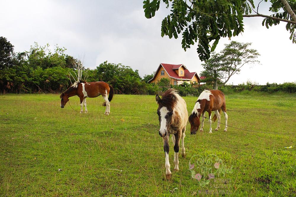 hotel kimberly horses