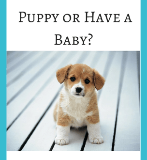 Should I Get A Puppy Or Have A Baby The Answer Is Here