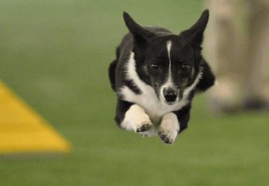 Agility Action Video