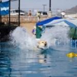 splashdogs-lores