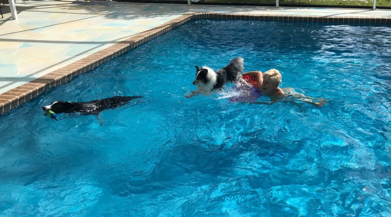 Barb Davis and Flex Swimming