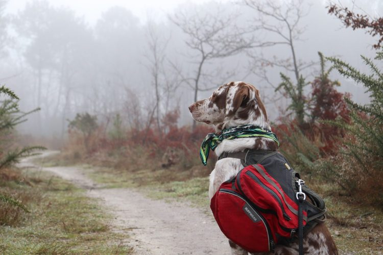 sac porté chien