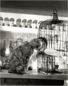 img_L-enfant--le-chat-et-la-colombe--1964_Robert-DOISNEAU_r