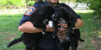 An officer carries puppies as part of the task force. (Pct. 5 Constable's Office courtesy photo)