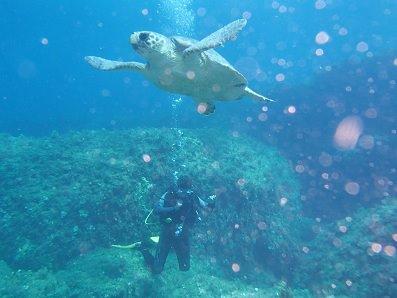 diving off paphos