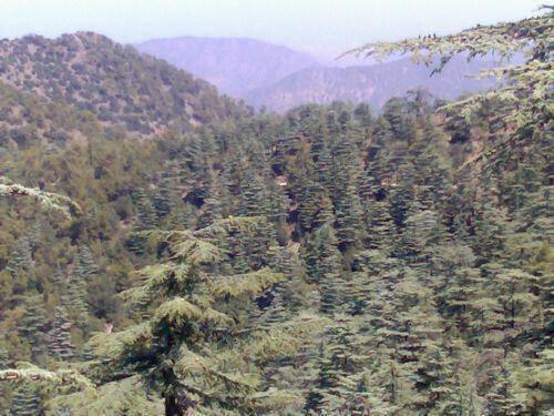 Εθνικό Δασικό Πάρκο Μαχαιρά Πηγή: Sigmalive