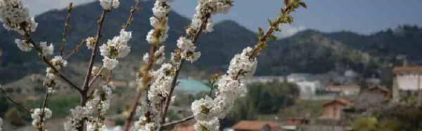 Pitsilia Wine Route