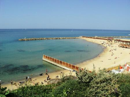 Cyprus Green Party: We ask Central Committee Beaches to promote more effectively the issue of running beaches for dogs as provided by the law on beaches