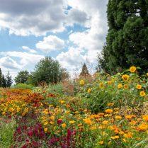 Léto v trojské botanické zahradě (7)
