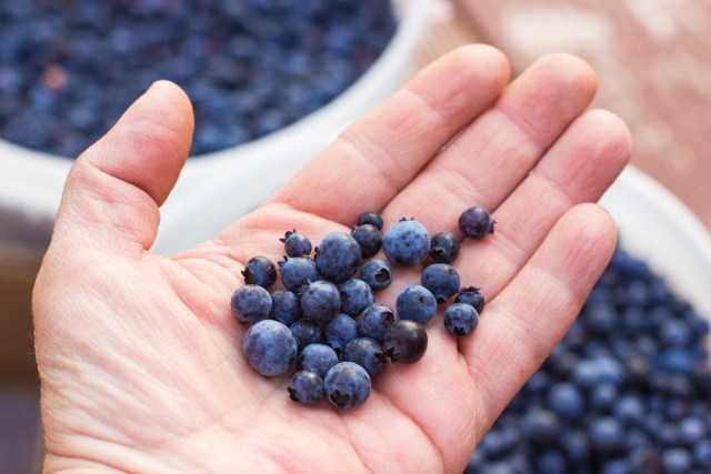 Blueberry and mushrooms 0018