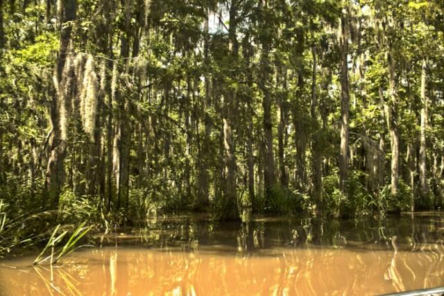 swamp port
