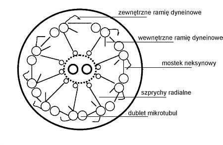 https://i1.wp.com/www.czytelniamedyczna.pl/img/ryciny/npe/2001/03/images/09.jpg