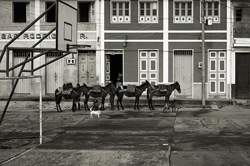 Pack mules wait outside the general store in Murillo, Colombia.