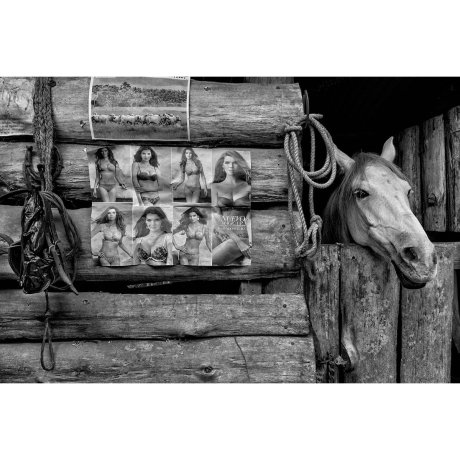 A horse relaxes in a barn with his pin-up poster in Salento, Colombia.