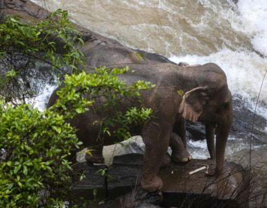 6 elephants drown at waterfall dapulse news