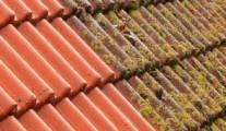dakpannen-reiniging4