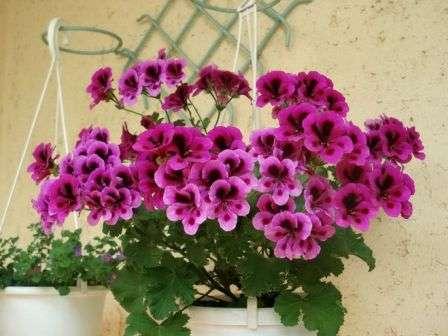 Какие цветы, цветущие круглый год, можно посадить в ...