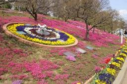 今日は芝桜を観に行った