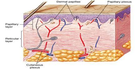 derma (fonte)