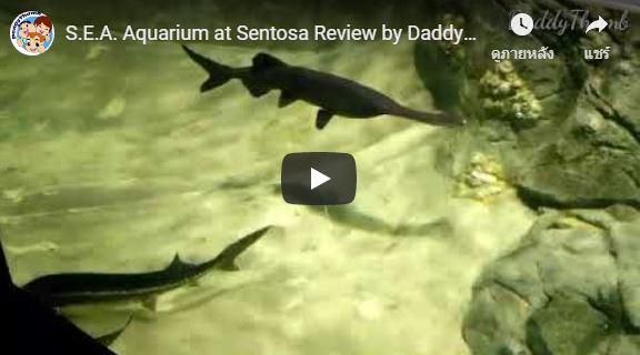 SEA Aquarium at Sentosa Review by DaddyThumb