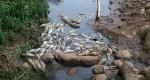 صور فضيعة وكارثية: المياه العادمة تهدد واحة تدغى