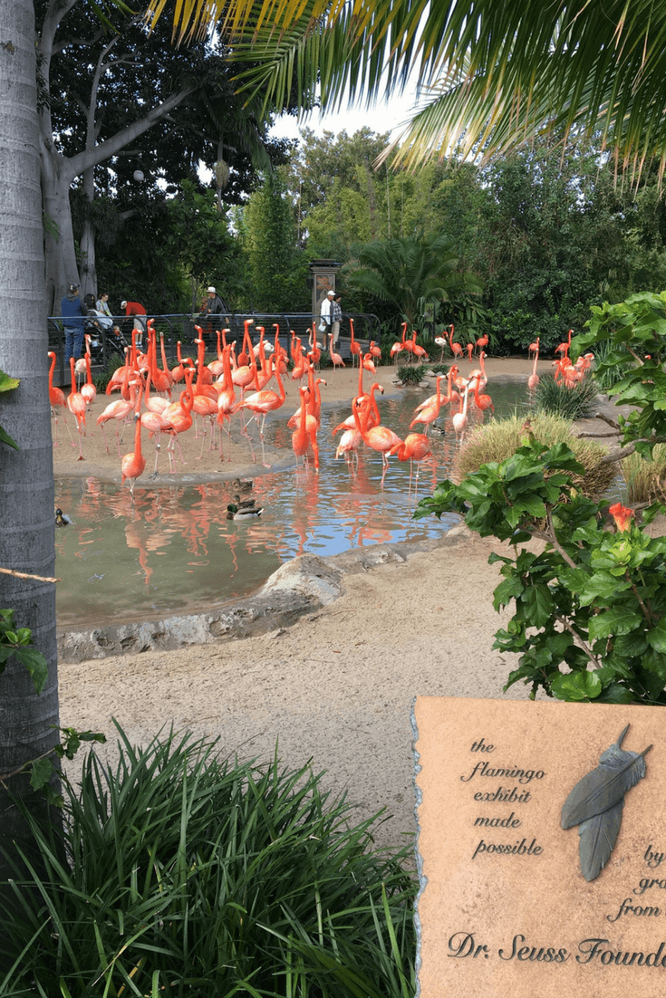 image of a flock of flamingos