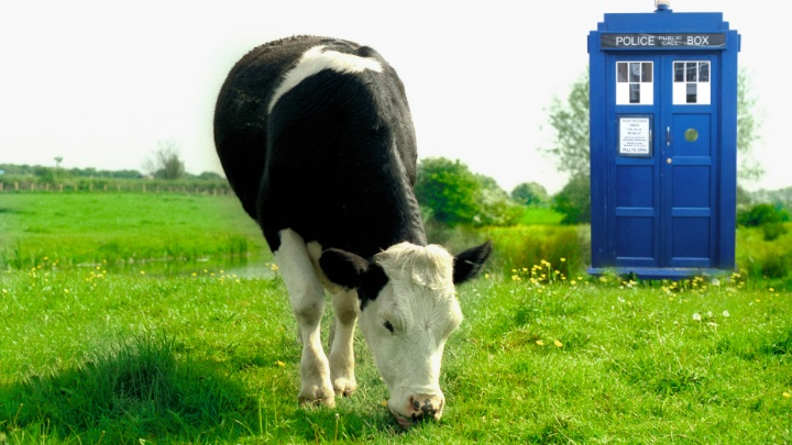 A cow and her tardis