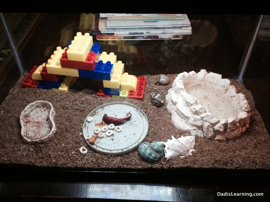 Hermit Crabs Favorite Things Friday