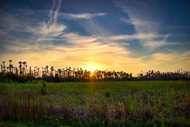 Orlando Wetlands Park Review With Photos Video