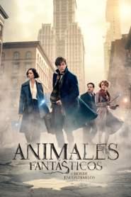 Animales fantásticos y dónde encontrarlos – HD Latino 1080p – Online