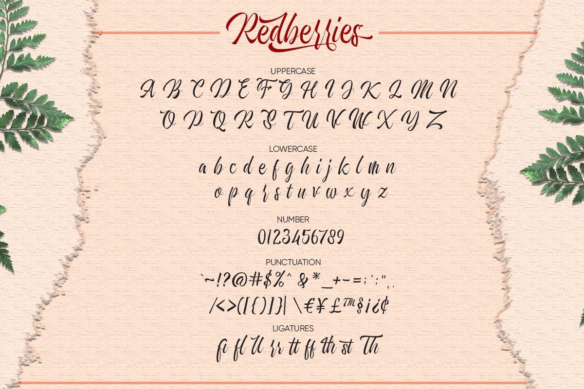 Redberries Calligraphy Script Font-3