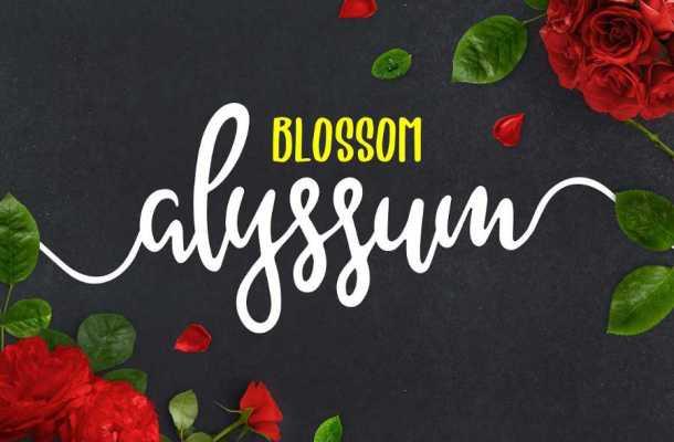 Alyssum Blossom Script Font Free