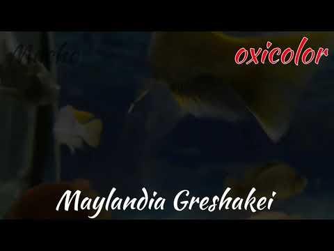 Mylandia Font