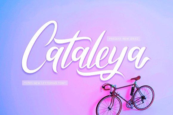 Cataleya Calligraphy Font