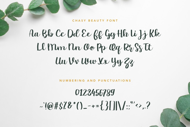 Chasy Beauty Calligraphy Script Font-3
