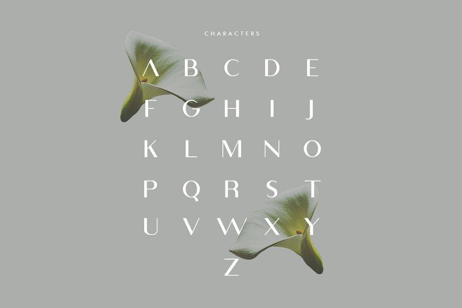 Viola Typeface-2