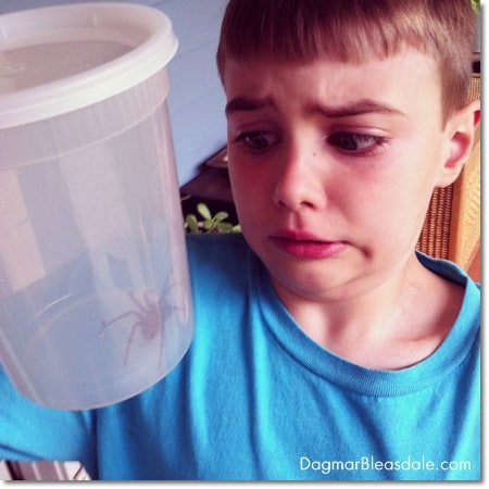 boy looking at large spider