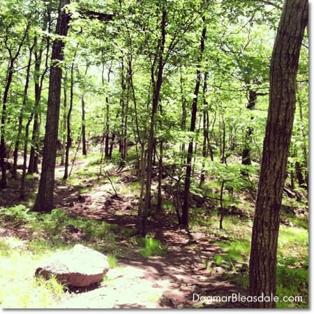 Wordless Wednesday Linky: Turkey Mountain Hike