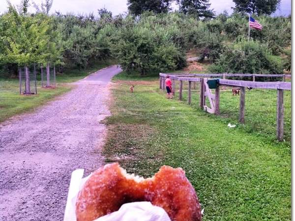 Wordless Wednesday — Sugar Donuts and a Tractor