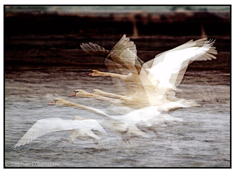 Flight - Toronto 2006. an example of in camera multiple exposure photo impressionism.