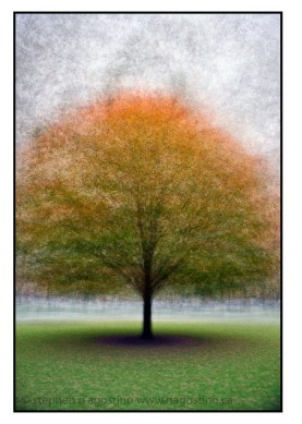 A maple tree turning colour on the front yard of Queen's Park: an example of the photo impressionism technique in the round
