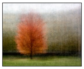The maple tree in front of the Veterans' Memorial, Queens Park, Toronto: an example of the photo impressionism technique in the round