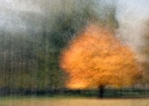 An impresiionistic maple tree: an example of the photo impressionism technique in the round