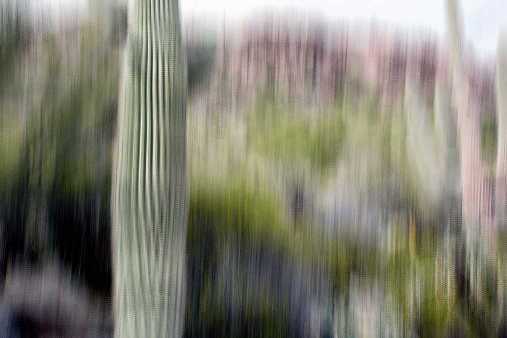 A Photo Impressionistic Approach to the Cactus Garden at the Phoenician